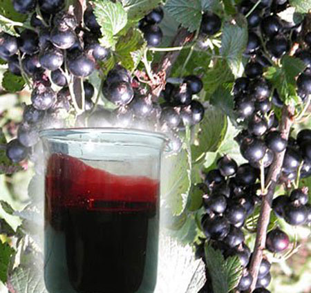Вино из сока чёрной смородины в домашних  686